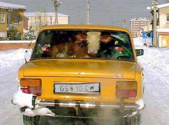 Kural tanımayan sürücüler