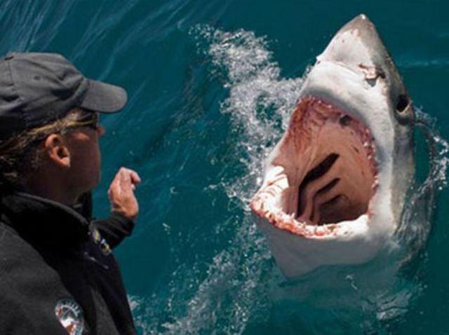 Dev köpekbalığı böyle saldırdı