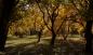 Van'da muhteşem sonbahar
