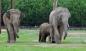 Yavru fil babasıyla ilk kez buluştu