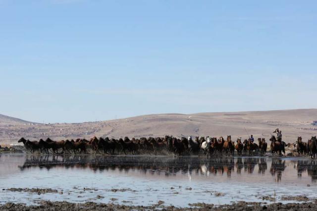 Erciyes eteklerinde Yılkı Atları!