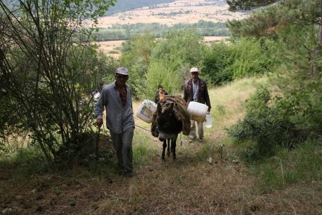 Akdoğan (Ebe Çamı) Tabiatı Koruma Alanı