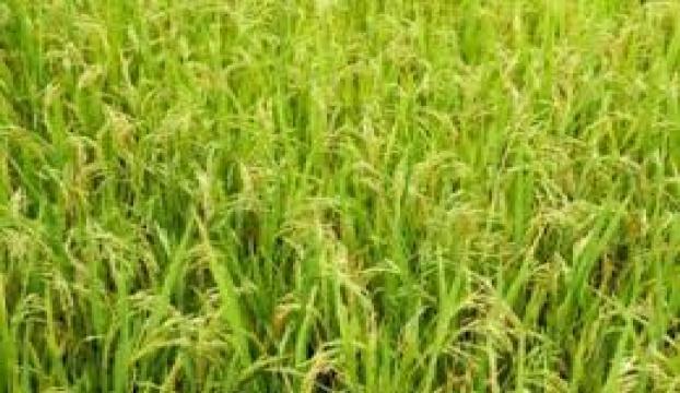 GSYHe tarım kısıtlaması