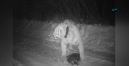 testPutin'in kaplanı köpek yedi