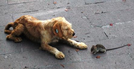 testKöpeğin fare ile oyunu şaşırttı!