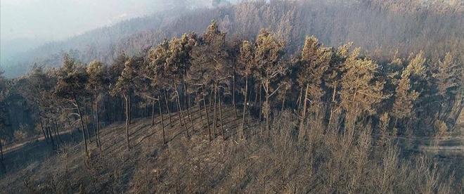 Adanadaki orman yangınına havadan müdahale devam ediyor