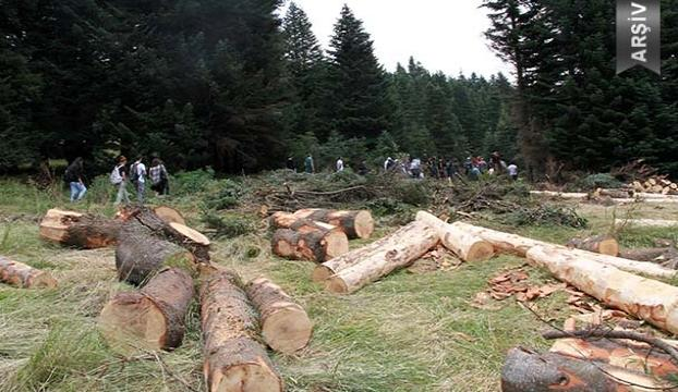 İki milyon ağaç kesilecek