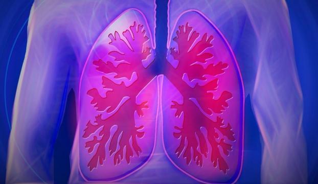 Akciğerin özelliklerini taklit eden organoidler geliştirildi