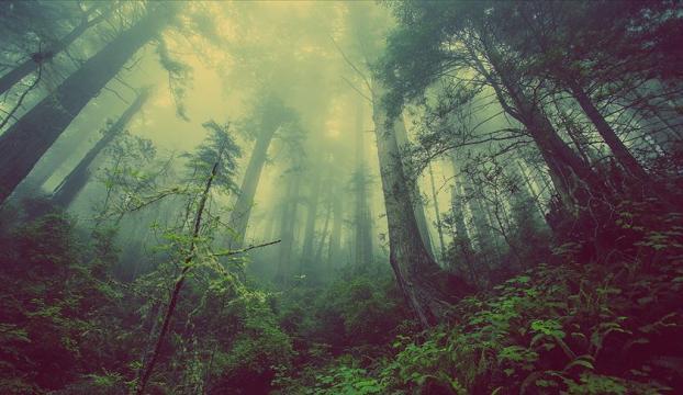 Amazonlardaki orman tahribatı artıyor