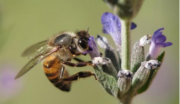 """""""Toplu arı ölümleri"""" yüzde 41e ulaştı"""