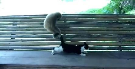 testYaramaz maymun kediyi maymun etti