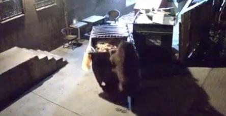 Aç kalan ayı çöp kutusunu çaldı