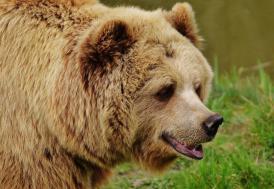 Erzurum'da ayı saldırısına uğrayan bir kişi öldü