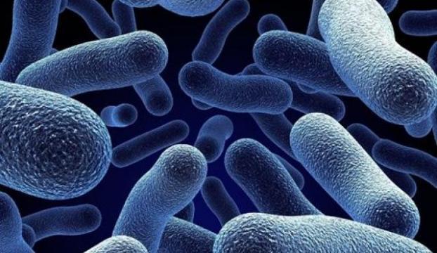 Bakteriden kayıt cihazı üretildi
