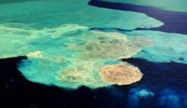 Bakteriler denizi ele geçirecek mi?