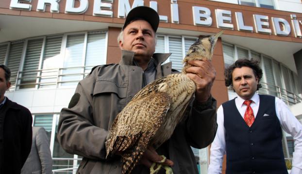 Soğuk nedeniyle uçamayan balaban kuşu bulundu