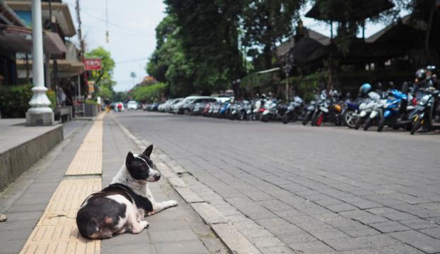 Yanardağ korkusuna Balide sokaklar bomboş kaldı