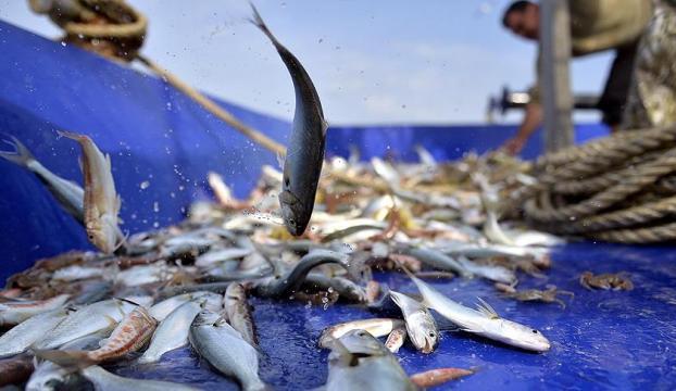 Balıkçılara destek ödemeleri bugün başladı