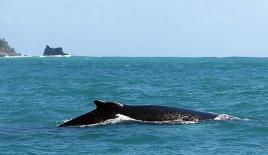 Fethiye'de balina görüntülendi