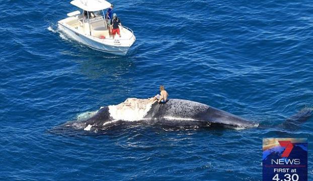 Ölü balinanın üzerinde yaşam savaşı