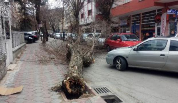 Başkentte şiddetli rüzgar ağaç devirdi