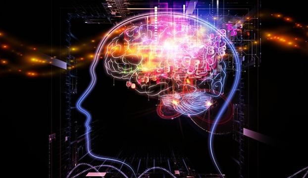 Beynin yüz tanıma merkezi yetişkinlikte de büyümeye devam ediyor