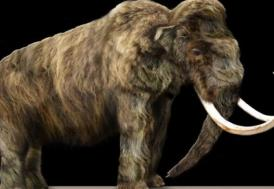Bilim adamlarının geri getirmek istediği yok olmuş 25 hayvan