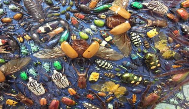 Doğaya 800 bin yararlı böcek salındı