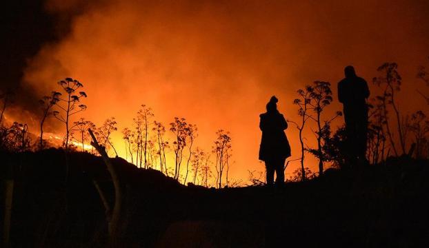 Bodrumdaki orman yangınında son durum