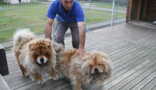 Böyle tatlı aslanlar görmediniz
