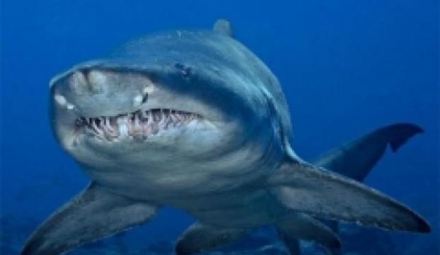 Köpekbalığını bebek kılığına sokarak çalmaya çalıştılar