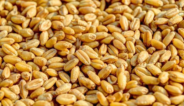 Çiftçiye 13 yılda 1,7 milyar liralık tohumculuk desteği
