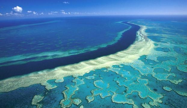 Mercan resifleri yok olmanın eşiğinde