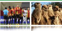Futbolculara hayvanlar aleminden ilginç benzetmeler