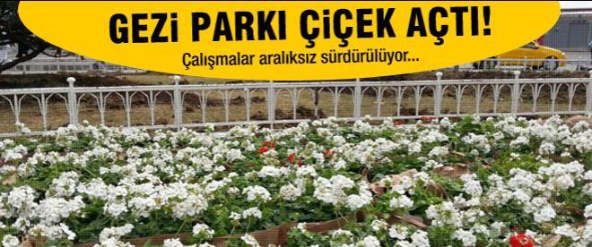Gezi Parkı çiçek açtı