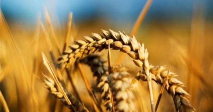 Genç çiftçilere 503 milyon lira hibe