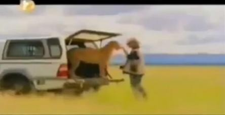 testÇitaların korkulu rüyası kangal köpekleri