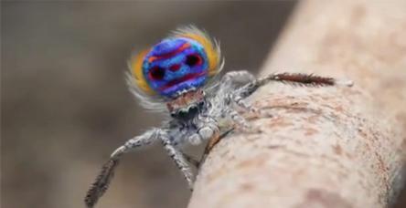 testDans eden örümcek şaşırtıyor!