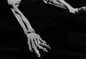Güney Kore'de bir dinozora ait olduğu düşünülen fosil bulundu