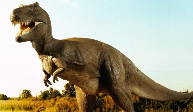 Suudi Arabistanda ilk dinozor kemikleri keşfedildi
