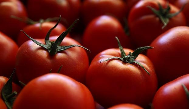 Rusyaya domates ihracatı görüşmeleri