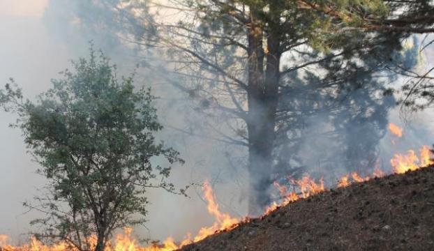 Manisada yaklaşık 300 zeytin ağacı yandı