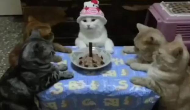 En tatlı doğum günü çocuğu