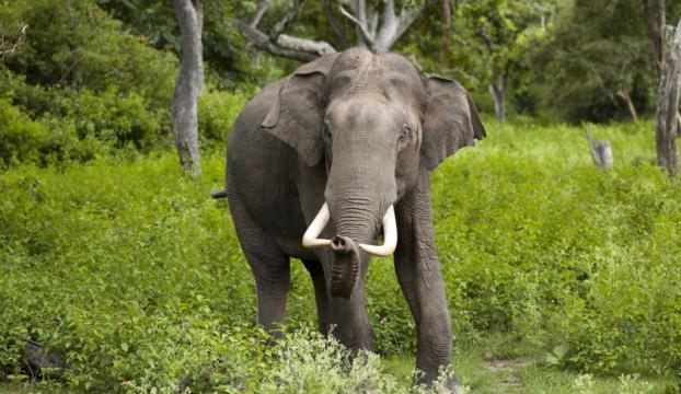 En az uyuyan memeli türü vahşi filler