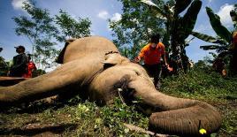 111 bin Afrika fili dişleri için katledildi