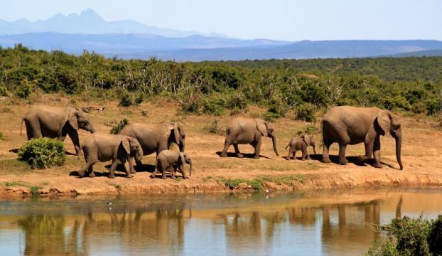 Sri Lankada filler yasa dışı avlanan 19 kişiyi öldürdü