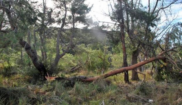 Fırtına ağaçları yerle bir etti