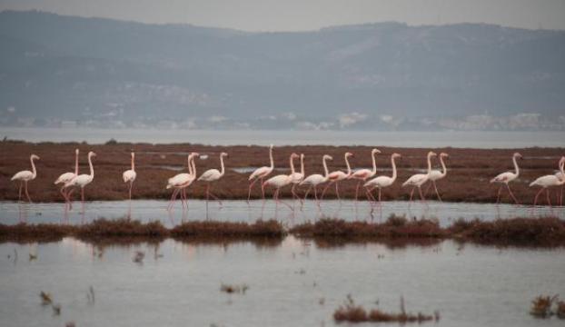 Flamingolar büyülediler