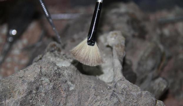 Güney Amerikada araba genişliğinde kaplumbağa fosili bulundu
