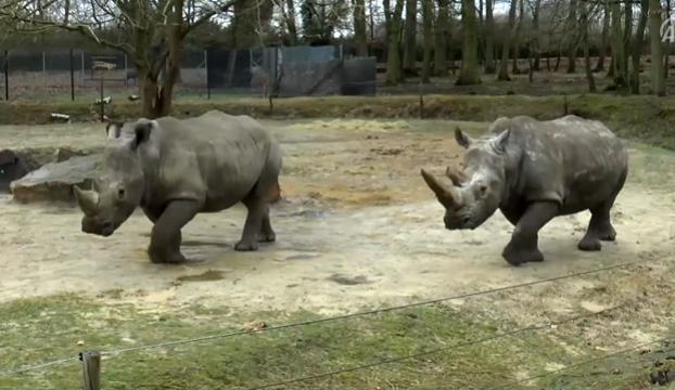 Parise yakın hayvanat bahçesinde boynuzu için gergedan öldürdüler!